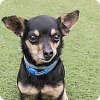 Adopt A Pet :: Spike - Agoura, CA