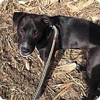 Adopt A Pet :: Pearl - Geneseo, IL