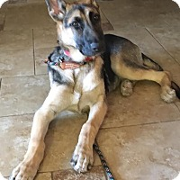 Adopt A Pet :: Lucy - Las Vegas, NV