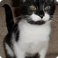 Adopt A Pet :: Georgina - Chattanooga, TN