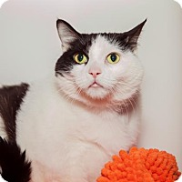 Adopt A Pet :: Hennessy - Mission Hills, CA