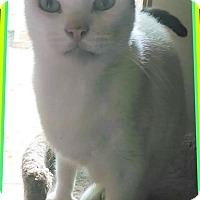 Adopt A Pet :: My Pal Hal - New Smyrna Beach, FL