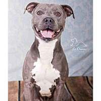 Adopt A Pet :: *KNOX* - Salt Lake City, UT