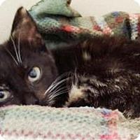 Adopt A Pet :: Valaska $20 - Lincolnton, NC