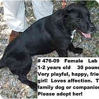 Adopt A Pet :: # 476-09 - ADOPTED! - Zanesville, OH