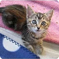 Adopt A Pet :: Tigerlilly - Modesto, CA