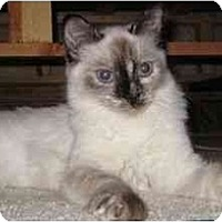 Adopt A Pet :: Savannah - Modesto, CA