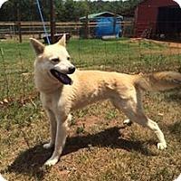 Adopt A Pet :: Summer - Indian Trail, NC