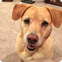 Adopt A Pet :: Ellie - Knoxville, TN