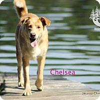 Adopt A Pet :: Chelsea - Adopted January 2017 - Huntsville, ON