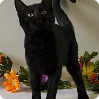 Adopt A Pet :: MELISSA - Sandusky, OH