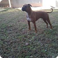 Adopt A Pet :: Jarvis - Wilmington, NC