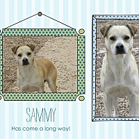 Adopt A Pet :: Sammy - Clear Lake, IA