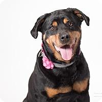 Adopt A Pet :: Magda - Tracy, CA