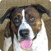 Adopt A Pet :: Mason - Ruidoso, NM