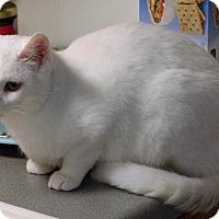 Adopt A Pet :: Luigi aka Eminem - Mackinaw, IL