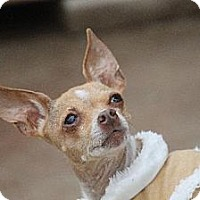 Adopt A Pet :: Betty Lou - Benton, LA