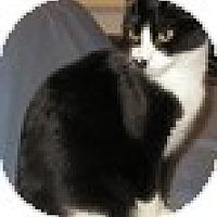 Adopt A Pet :: Mitzi - Vancouver, BC