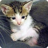 Adopt A Pet :: Muffin - Secaucus, NJ