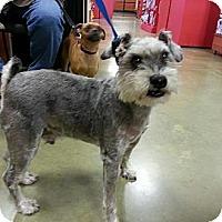 Adopt A Pet :: Fred & Ginger - Ogden, UT