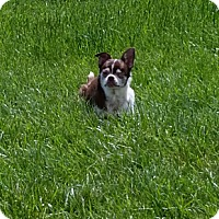 Adopt A Pet :: Lucy - levittown, PA