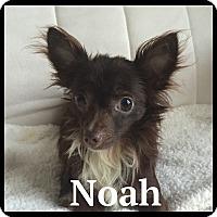 Adopt A Pet :: Noah - Indian Trail, NC
