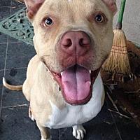 Adopt A Pet :: Simba - Santa Monica, CA