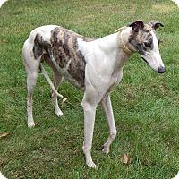 Adopt A Pet :: Barry - Florence, KY