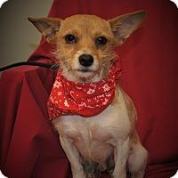 Adopt A Pet :: BJ ~ DOB 11/2015! - Saratoga Springs, NY