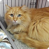 Adopt A Pet :: Mufasa - Orleans, VT