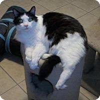 Adopt A Pet :: Laramie - Lacon, IL