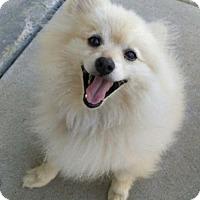 Adopt A Pet :: Haystack - Dallas, TX