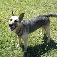 Adopt A Pet :: Precious - Rockmart, GA