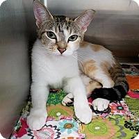 Adopt A Pet :: Jenga - Umatilla, FL