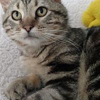 Adopt A Pet :: Rumble - St. Louis, MO
