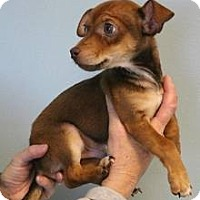 Adopt A Pet :: Pepe - Shawnee Mission, KS