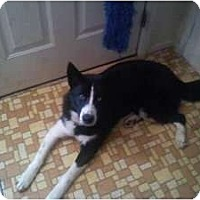 Adopt A Pet :: Dakota*Courtesy - Xenia, OH