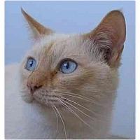 Adopt A Pet :: Leon - AUSTIN, TX