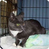 Adopt A Pet :: Rooey - Jenkintown, PA