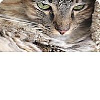 Adopt A Pet :: Jackie - El Cajon, CA