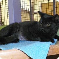 Adopt A Pet :: Becca - Dover, OH