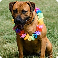 Adopt A Pet :: #435-14 ADOPTED! - Zanesville, OH