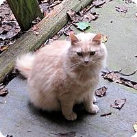 Adopt A Pet :: Karma - Kirkwood, DE