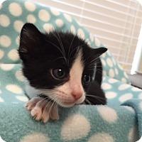 Adopt A Pet :: Hansel - Union, KY