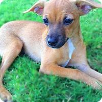 Adopt A Pet :: Pan - Scottsdale, AZ