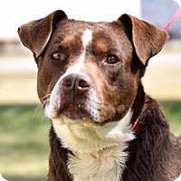 Adopt A Pet :: Tigger - Whiteville, NC