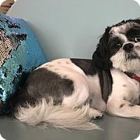 Adopt A Pet :: BENTLEY - Fort Atkinson, WI