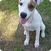 Adopt A Pet :: SUNNI - Beaumont, TX