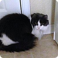 Adopt A Pet :: Heidi - Sacramento, CA