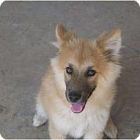 Adopt A Pet :: Luverne - Glastonbury, CT